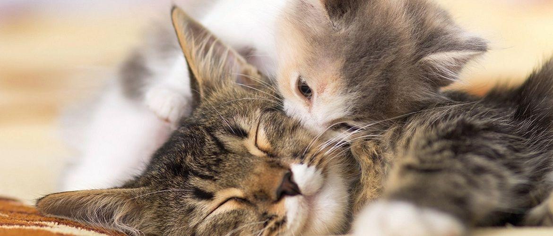 Тварини та їх малюки: фото, від яких неможливо стримати посмішку