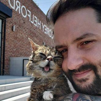 Кошка  Lil