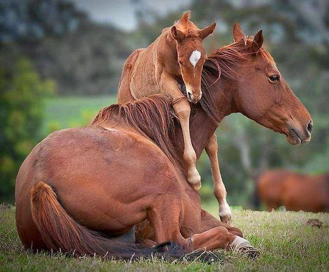 кінь лоша