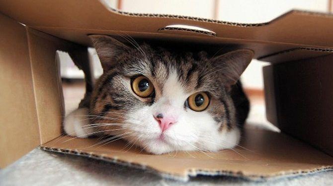 кошка Мару