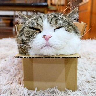 Топ котів-блогерів: вусаті, багаті і знамениті 1