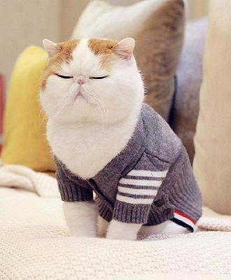 Топ котів-блогерів: вусаті, багаті і знамениті 7