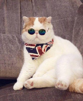 Топ котів-блогерів: вусаті, багаті і знамениті 8