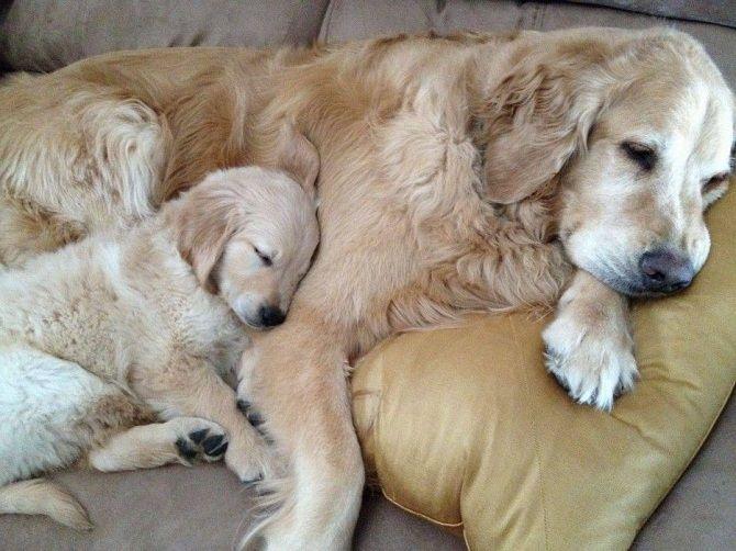 собака спить