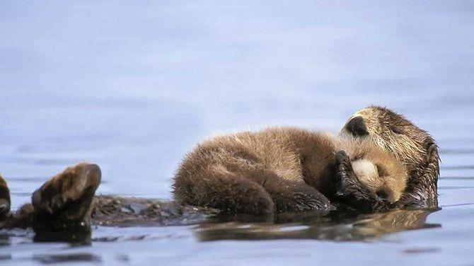 Тварини та їх малюки: фото, від яких неможливо стримати посмішку 2