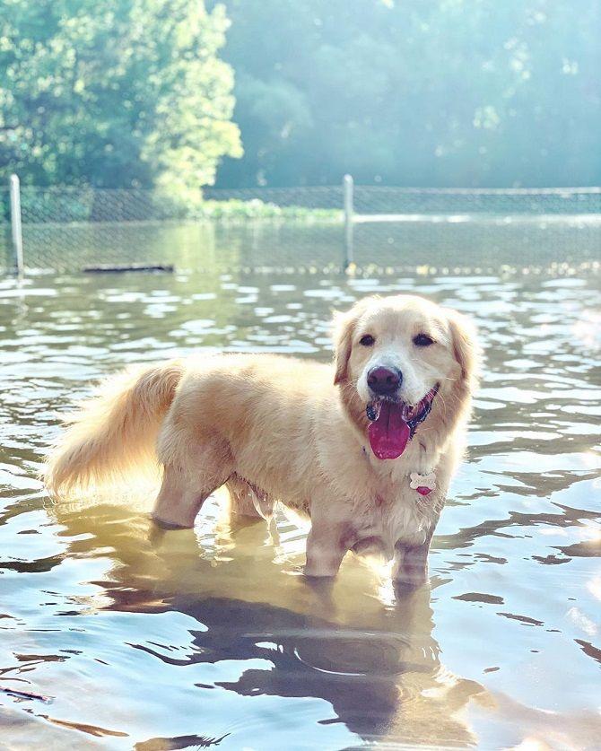 пес в воде