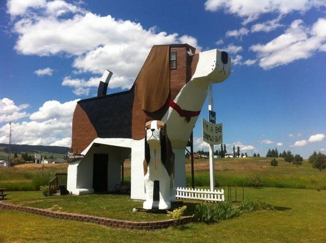 дом собака