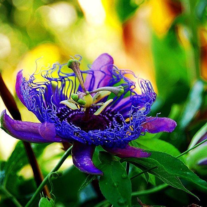 Самые красивые и необычные цветы мира: такого вы ещё не видели 2