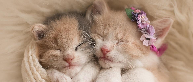 Всемирный день кошек: с праздником, котаны! (фото котов наших читателей)
