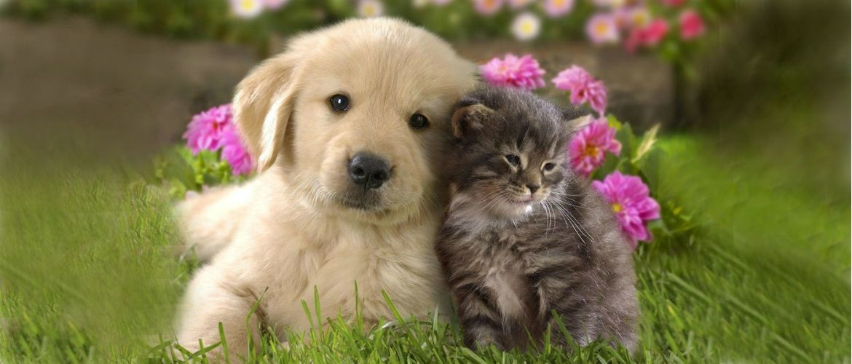 Кошки vs собаки: 10 доказательств того, что они из разных планет