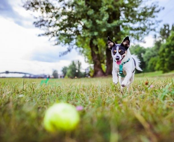 собака з мячем