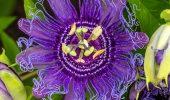 Найкрасивіші і найбільш незвичайні квіти світу: такого ви ще не бачили