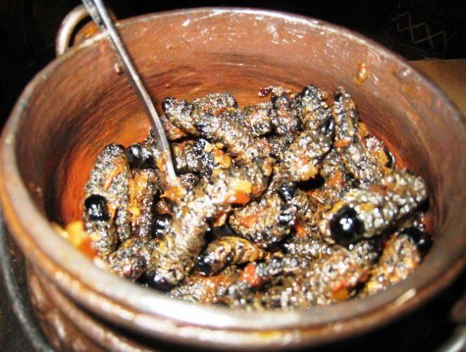 Гусеницы мопане