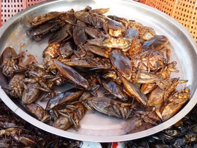 еда жареные тараканы