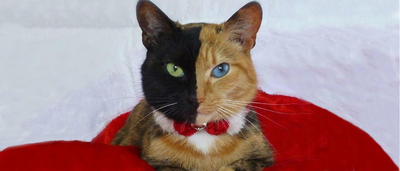 Топ котів-блогерів: вусаті, багаті і знамениті