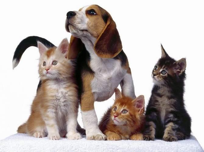 приспособления для питомцев собаки котики