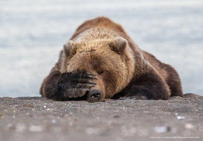 40 найсмішніших фото дикої природи Comedy Wildlife Photography Awards: фіналісти конкурсу 10