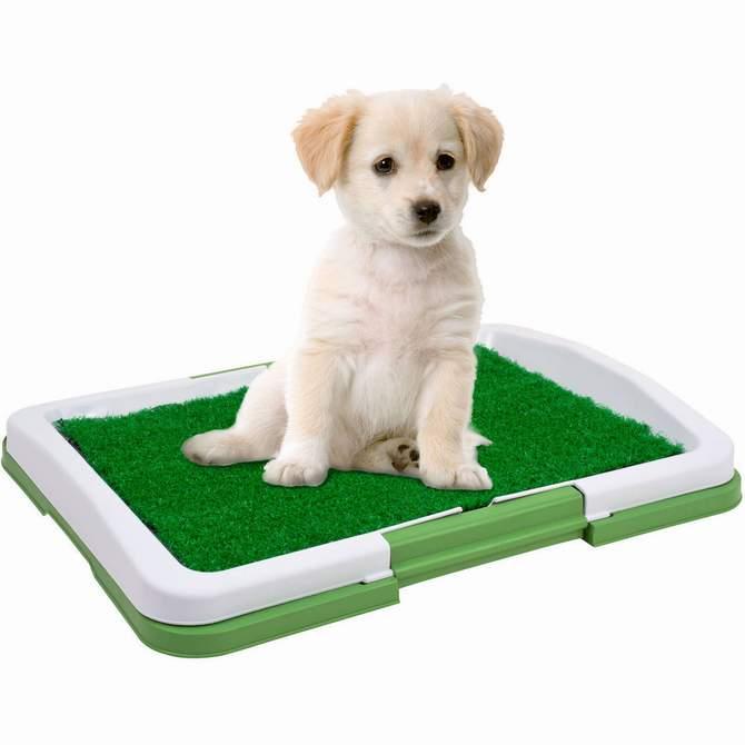 щенок белый Домашний туалет для собак