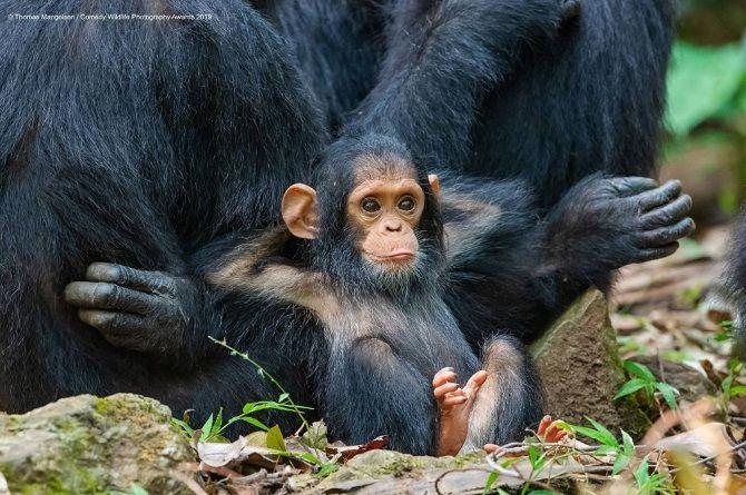 40 найсмішніших фото дикої природи Comedy Wildlife Photography Awards: фіналісти конкурсу 13