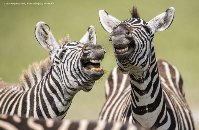 40 найсмішніших фото дикої природи Comedy Wildlife Photography Awards: фіналісти конкурсу 14