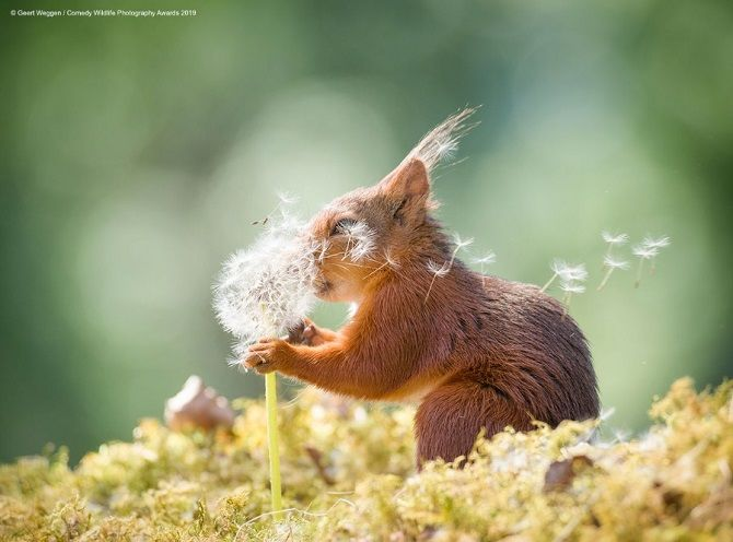 40 найсмішніших фото дикої природи Comedy Wildlife Photography Awards: фіналісти конкурсу 15