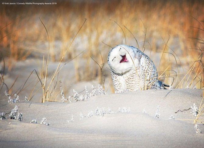 40 найсмішніших фото дикої природи Comedy Wildlife Photography Awards: фіналісти конкурсу 16