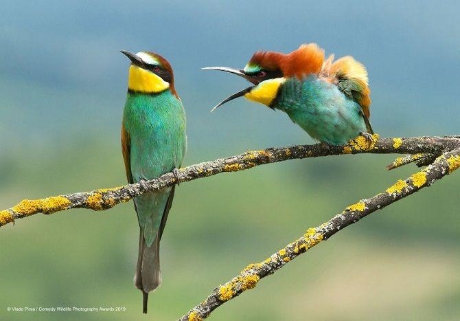 40 найсмішніших фото дикої природи Comedy Wildlife Photography Awards: фіналісти конкурсу 17