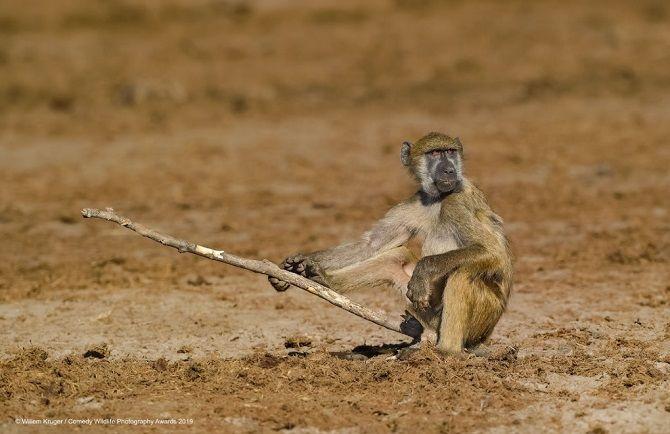 40 найсмішніших фото дикої природи Comedy Wildlife Photography Awards: фіналісти конкурсу 19