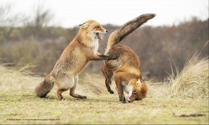40 найсмішніших фото дикої природи Comedy Wildlife Photography Awards: фіналісти конкурсу 1