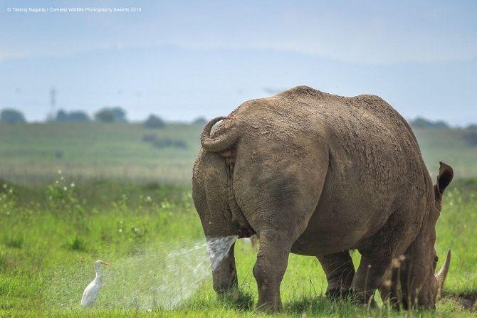 40 найсмішніших фото дикої природи Comedy Wildlife Photography Awards: фіналісти конкурсу 20
