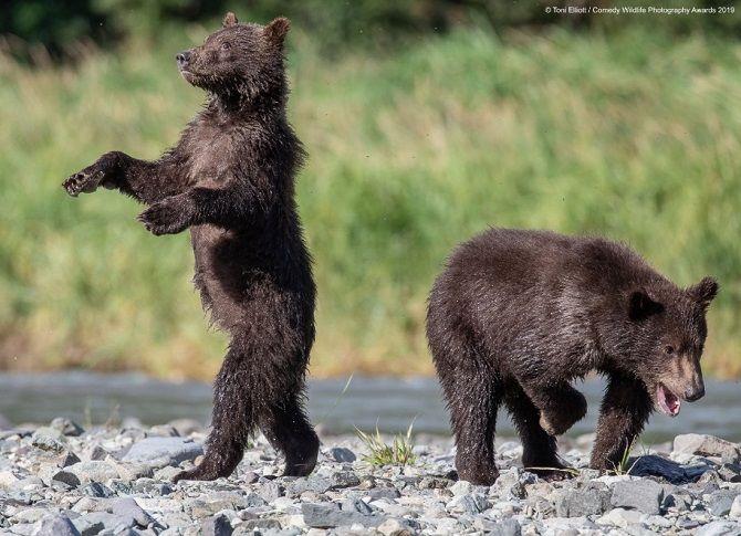 40 найсмішніших фото дикої природи Comedy Wildlife Photography Awards: фіналісти конкурсу 21
