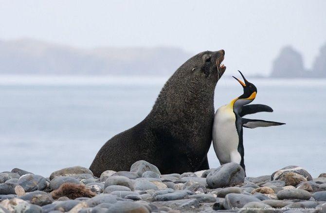 40 найсмішніших фото дикої природи Comedy Wildlife Photography Awards: фіналісти конкурсу 24