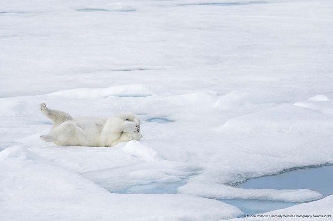 40 найсмішніших фото дикої природи Comedy Wildlife Photography Awards: фіналісти конкурсу 25
