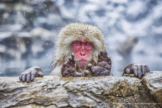 40 найсмішніших фото дикої природи Comedy Wildlife Photography Awards: фіналісти конкурсу 26