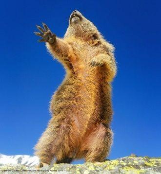 40 найсмішніших фото дикої природи Comedy Wildlife Photography Awards: фіналісти конкурсу 28