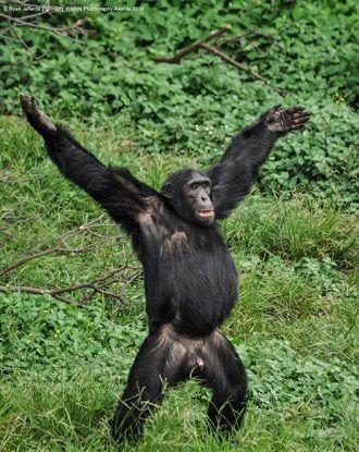 40 найсмішніших фото дикої природи Comedy Wildlife Photography Awards: фіналісти конкурсу 30