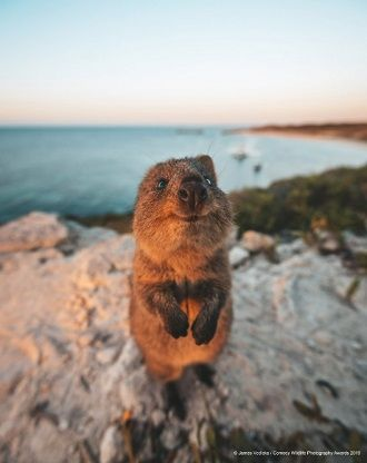 40 найсмішніших фото дикої природи Comedy Wildlife Photography Awards: фіналісти конкурсу 33