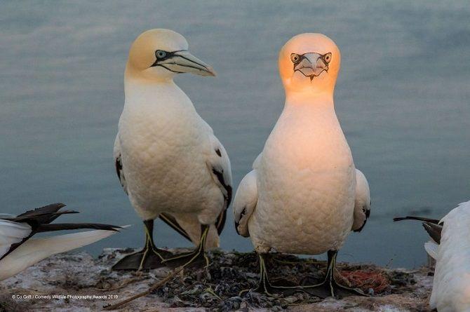 40 найсмішніших фото дикої природи Comedy Wildlife Photography Awards: фіналісти конкурсу 6