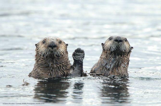 40 найсмішніших фото дикої природи Comedy Wildlife Photography Awards: фіналісти конкурсу 8