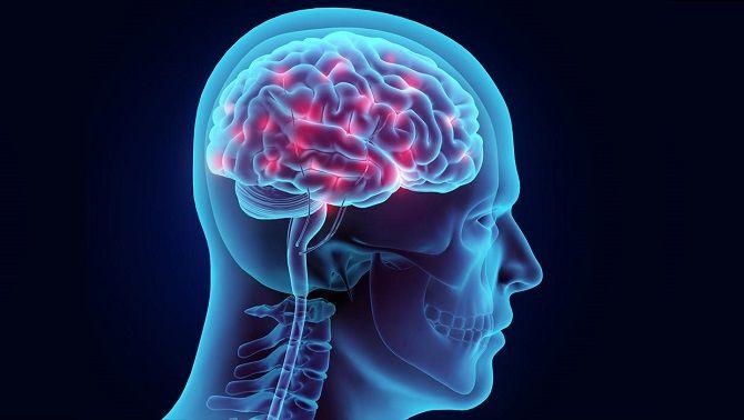 клітини мозку