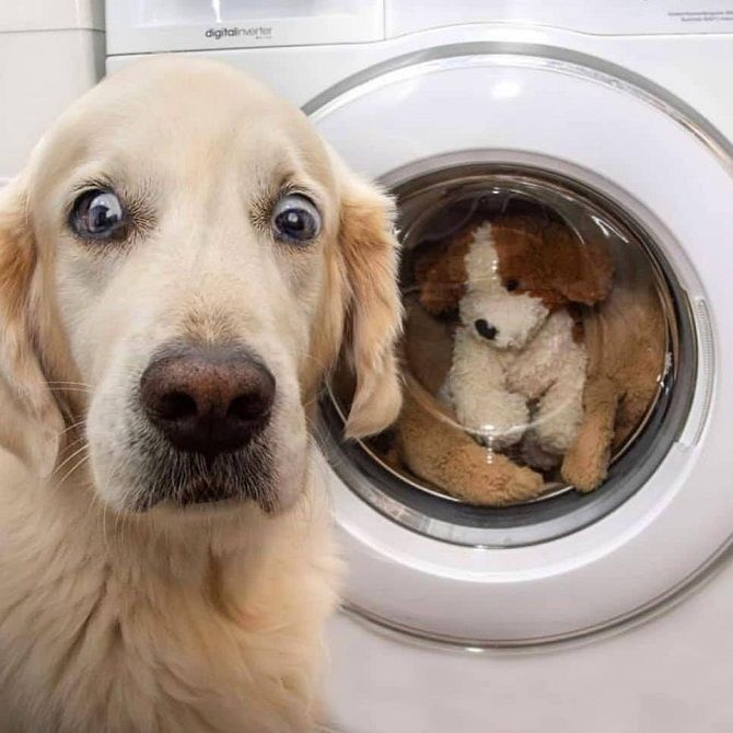 собака с игрушкой