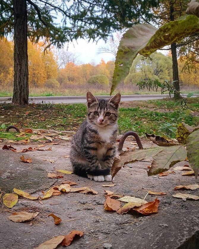 котик осінь