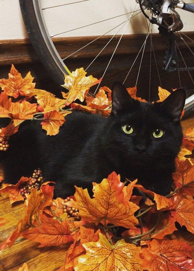 чорний кіт в листях