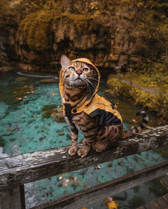 кот осінь