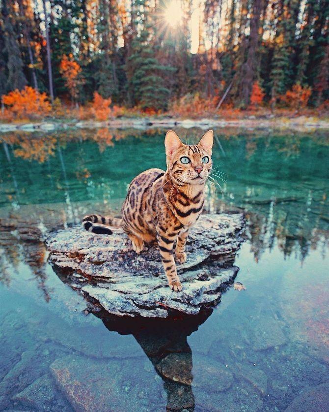 кіт біля води