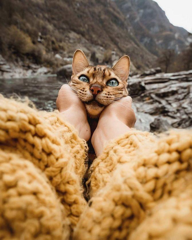 красиві фото кота