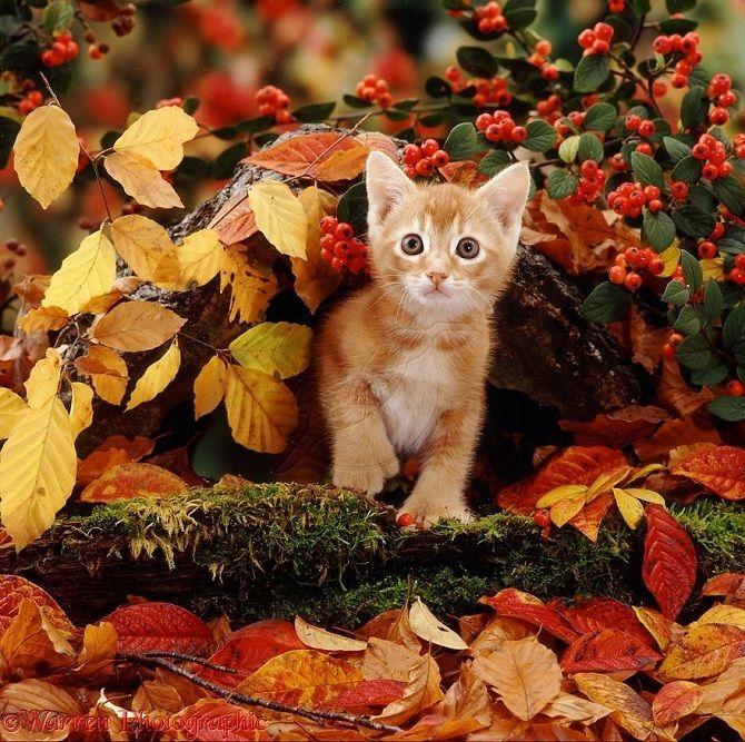 красивий кіт фото