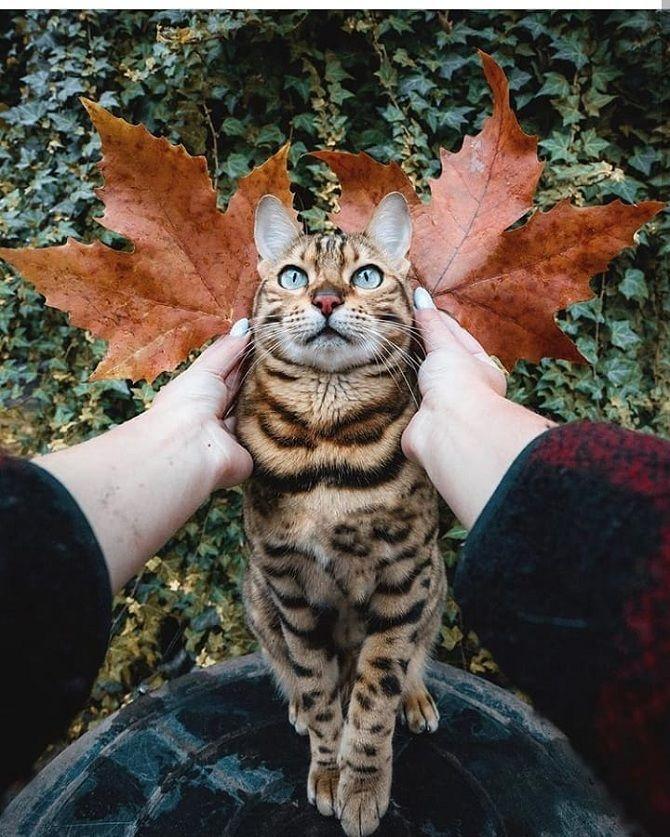 кіт осінь