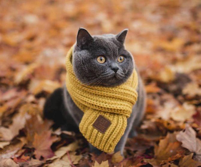 кіт в шарфі