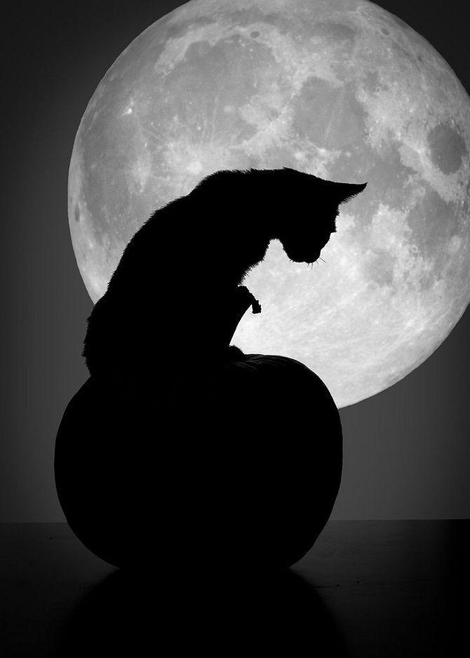 кошка луна